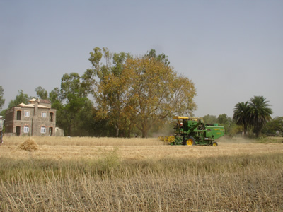 2013 Wheat Combine Harvested