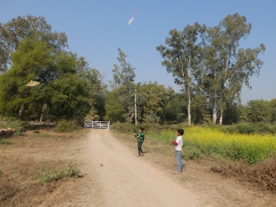 Kite Flying at Sankranti