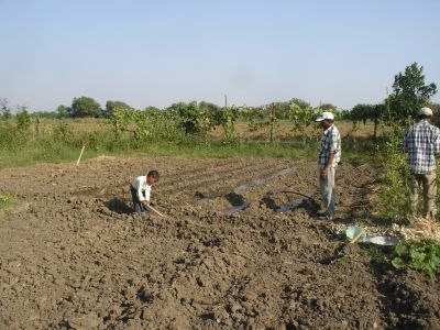 Preparing the Veg Garden