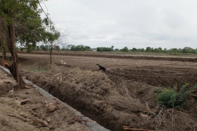 Sarandha Field Terraced & Levelled