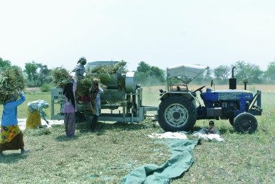 Threshing Moong